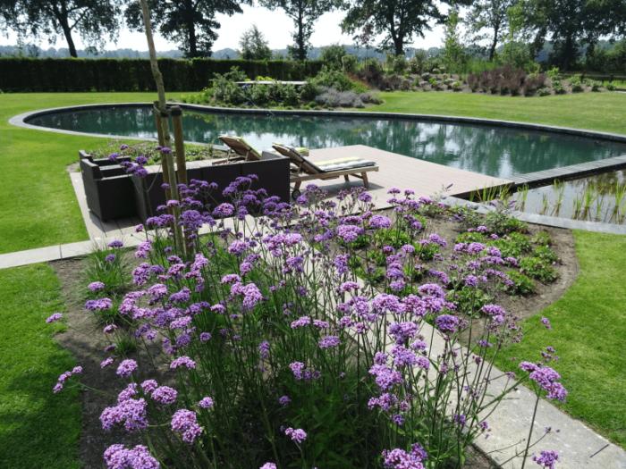Een zwemvijver type 2 met ligstoelen en bloemen.